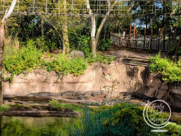 WIld Africa Trek Alligators