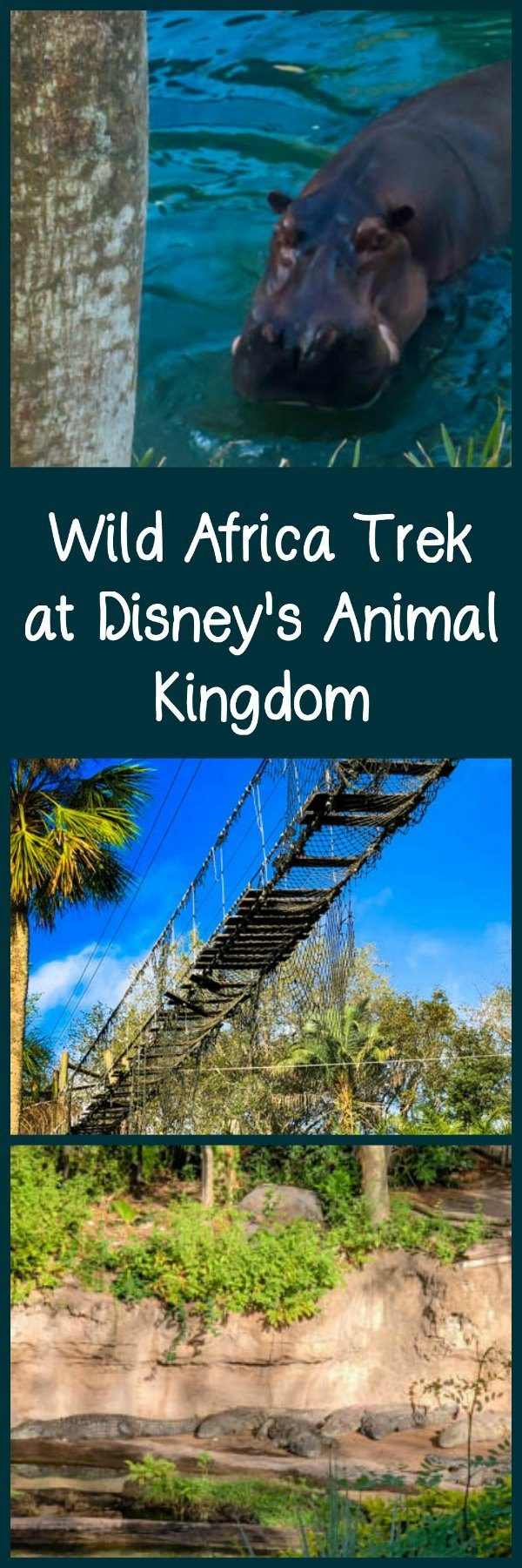 A review of the three-hour Wild Africa Trek at Disney's Animal Kingdom - a VIP tour experience at Walt Disney World.