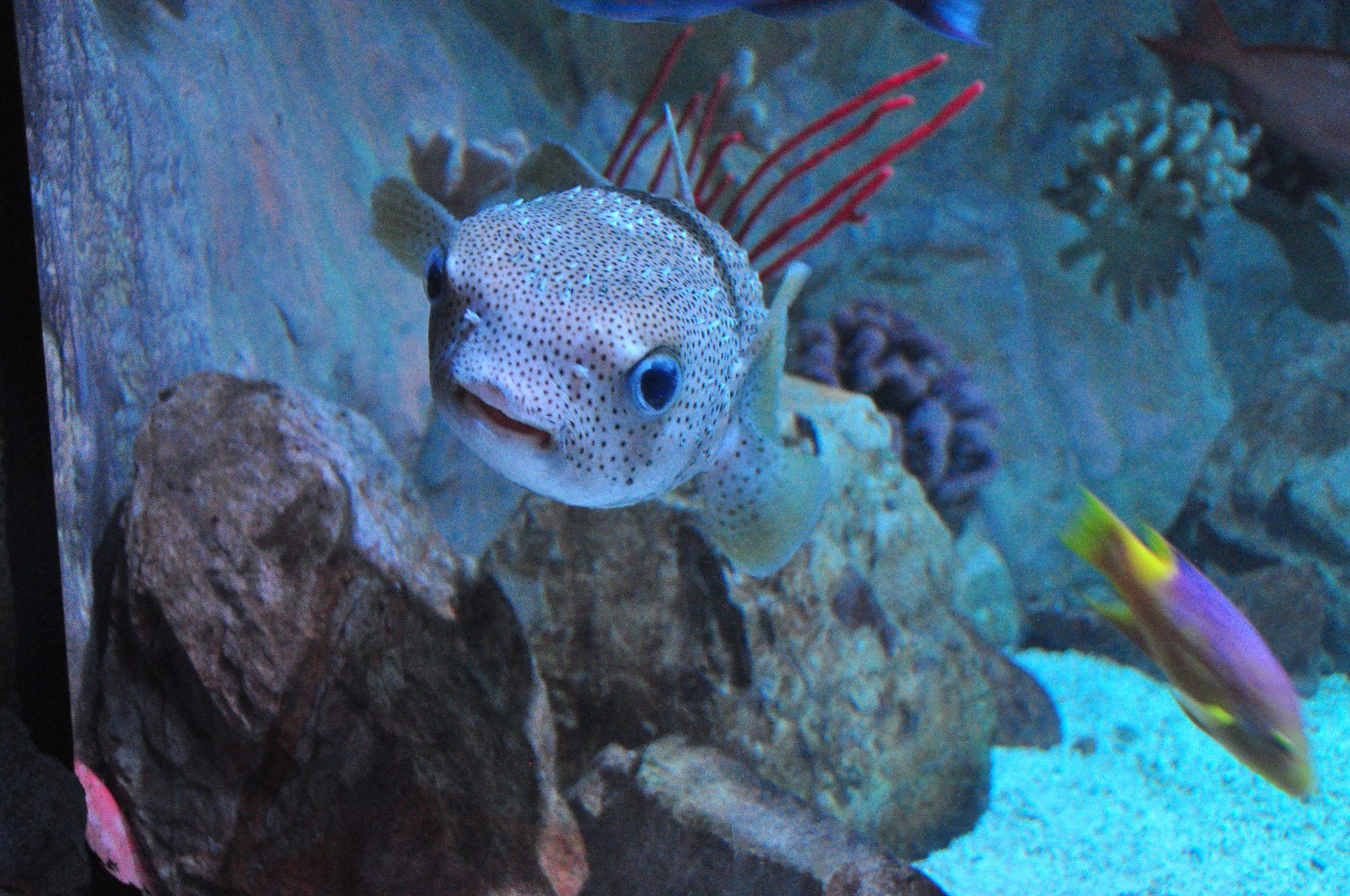 A review of sea life aquarium in phoenix arizona family Arizona mills mall aquarium