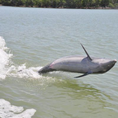 Review of the Dolphin Explorer Marco Island Tour in Florida