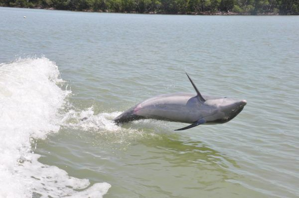 The Dolphin Study Eco-Tour and Cruise