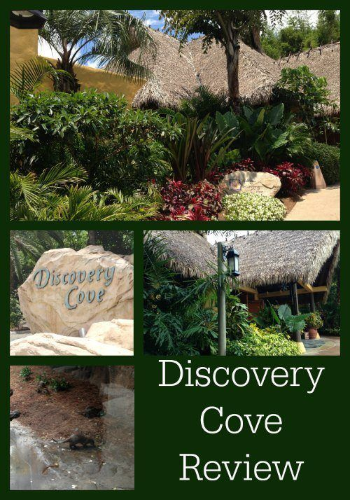 Discovery Cove Review
