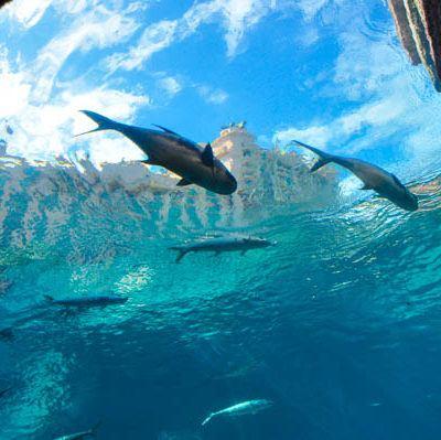 A Day in Atlantis, Paradise Island, The Bahamas