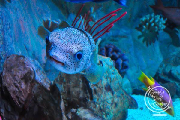 A fish at Sea Life Arizona