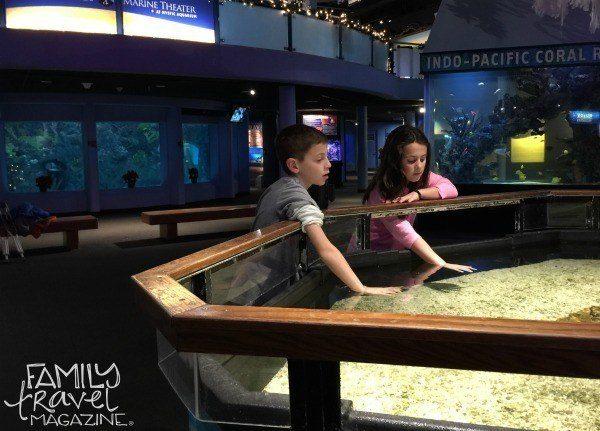 Mystic Aquarium Touch Tank