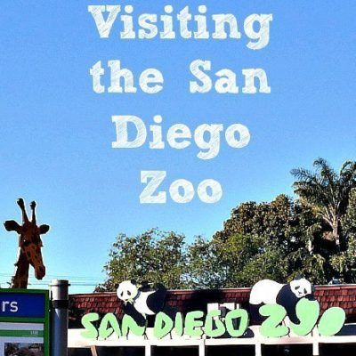Tips for Visiting the San Diego Zoo