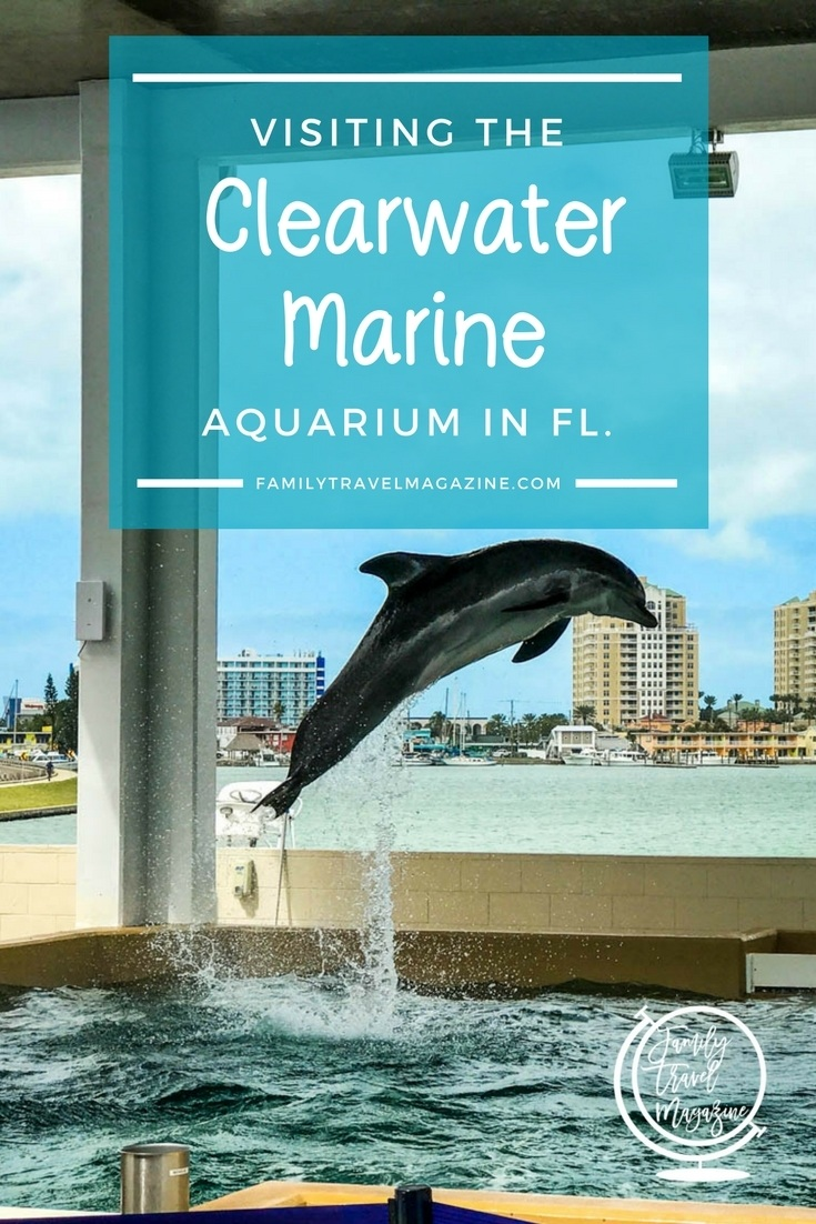 Our experience at the Clearwater Marine Aquarium in Clearwater, Florida, home to movie stars Winter and Hope from the Dolphin Tale movies.