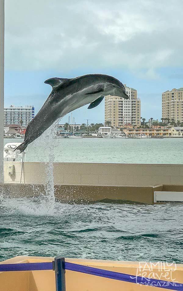 Visiting the Clearwater Marine Aquarium