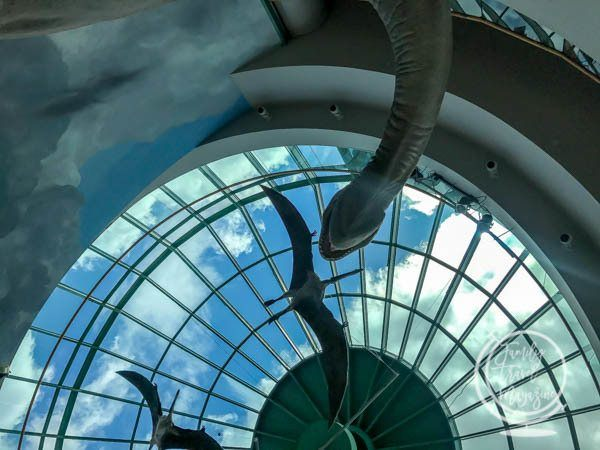 The North Carolina Museum of Natural Sciences, a fun activity in Raleigh with kids.