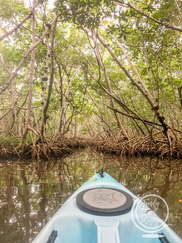 Things to Do in Sarasota With Kids, including the Ringling Museum and kayaking through mangroves.