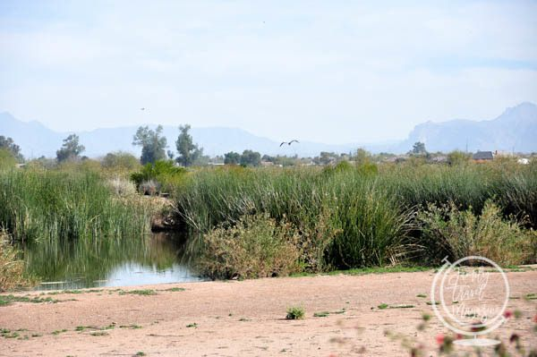 Bird Watching at Veterans Oasis Park