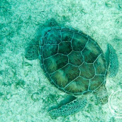 Best Family Snorkeling Vacation Resorts and Destinations