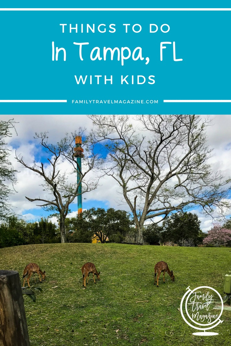 Things to do in Tampa with kids, including Busch Gardens Tampa Bay, the Lowry Park Zoo, and a day trip to Clearwater Beach.