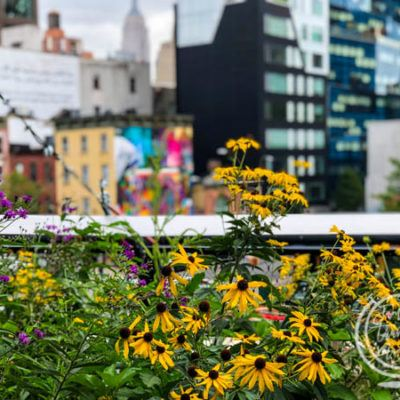 Tips for Visiting The High Line NYC With Kids