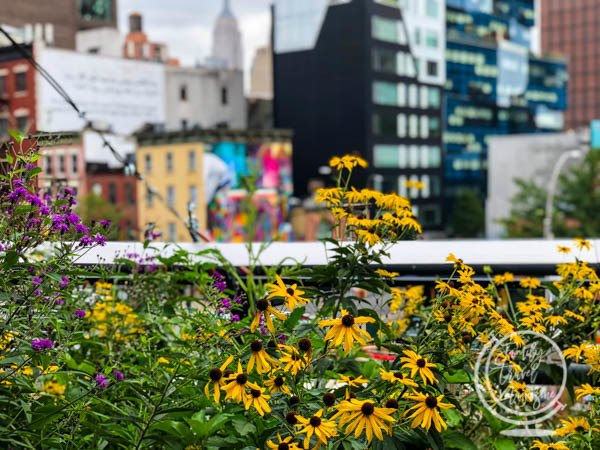 Flowers and the Empire State Building on the High Line