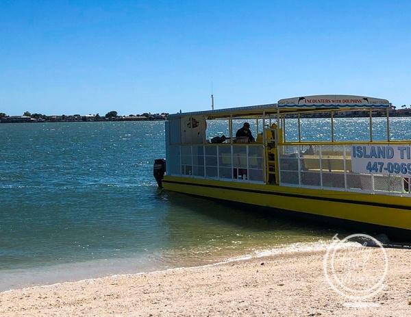 Dolphin Encounter boat