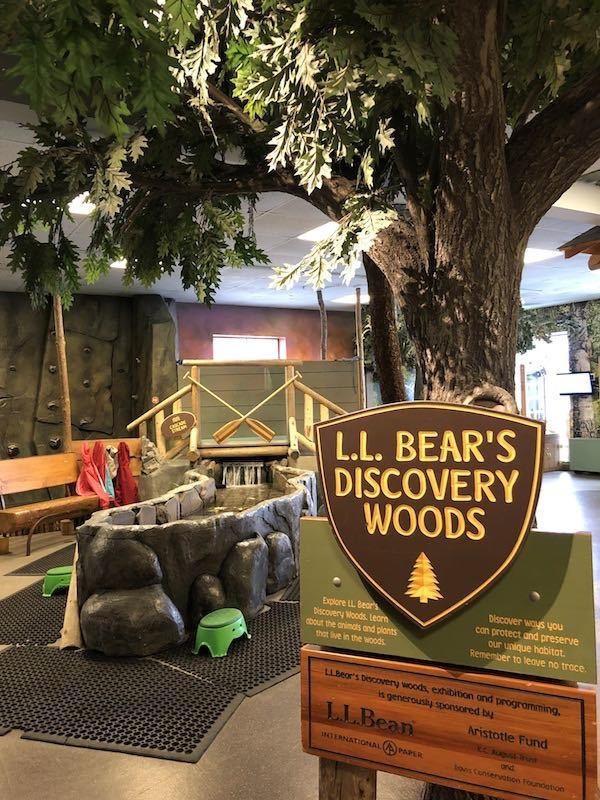 LL Bear Discovery Woods in the Portland Children's Museum