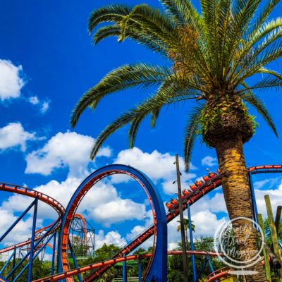 A Guide to Busch Gardens Tampa Rides