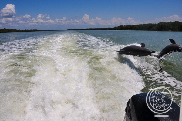 The Dolphin Explorer Eco-Tour, one of the best things to do in Marco Island