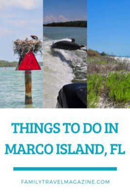 Things to do in Marco Island with kids including the dolphin eco-tour, shelling, and more.
