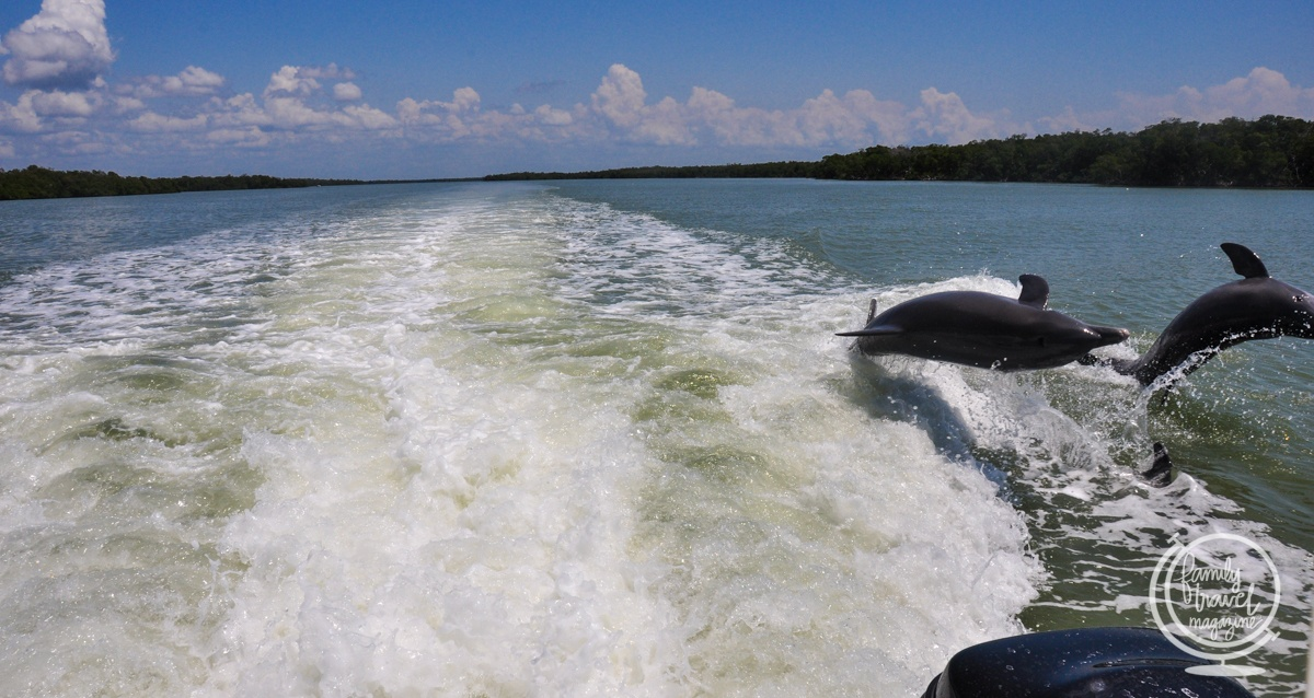 The Dolphin Explorer Eco-Tour on Marco Island