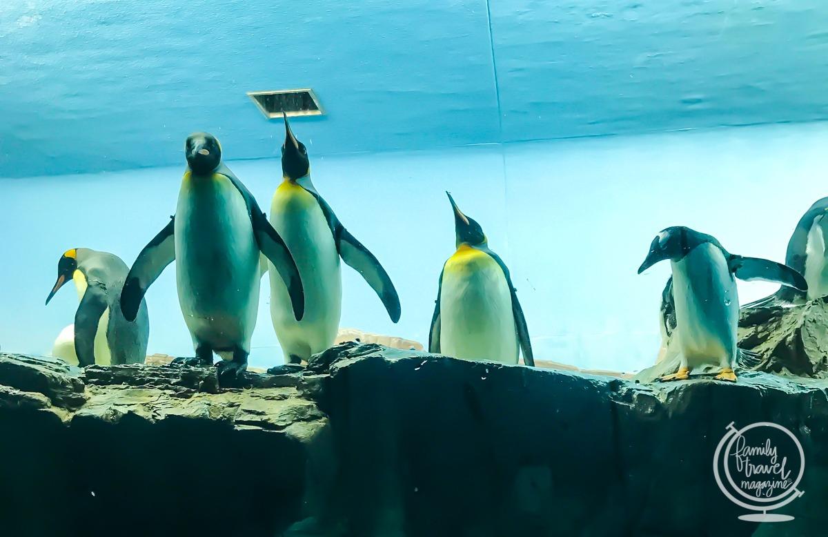 Penguins at SeaWorld San Antonio