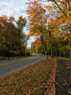 Foliage covered street
